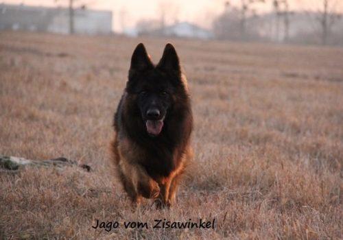 Jago vom Zisawinkel